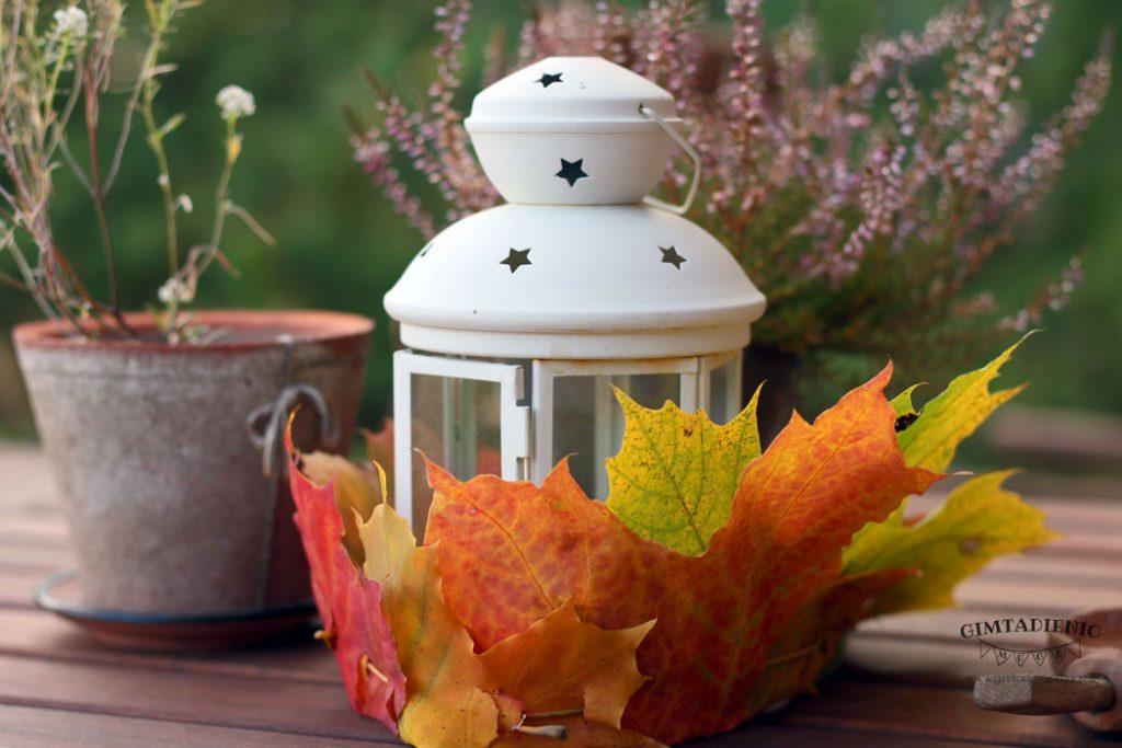 rudens dekoracijos kiemui