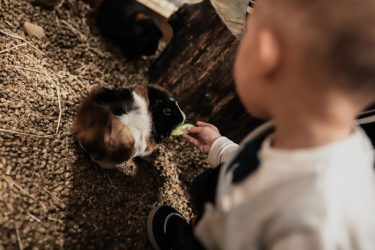 vaiko gimtadienis gyvūnai