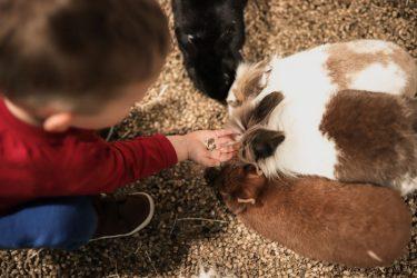 vaikų gimtadienis su žvėriukais kaunas