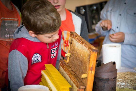 ką veikti per bitės gimtadienį