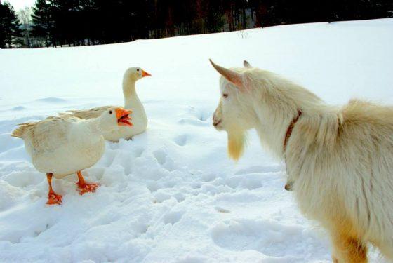 idėjos vaikų šventėms žiemą