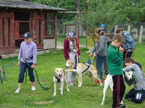 šunų kinkiniai programos mokiniams