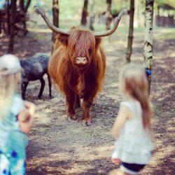 vaiko gimtadienis su gyvūnais