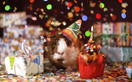 vaikų gimtadieniai restorane hbh vilnius