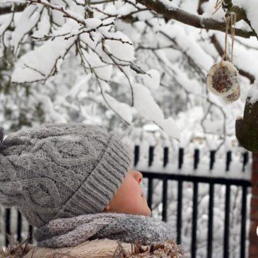 pyragas paukščiams arba kuo lesinti sparnuotus bičiulius
